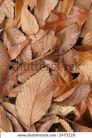 Fallen Leaves - stock photo