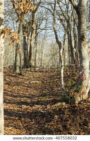 Fallen leaves along path through woods in November - stock photo