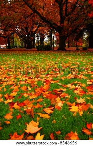 Fallen leaves on a college campus
