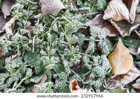 Fallen leaves on the green grass covered with hoarfrost - stock photo