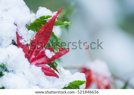 Fallen leaves on the snow