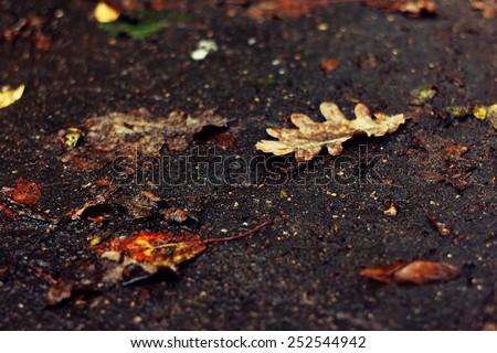 Fallen oak leaf on a dirt road - stock photo