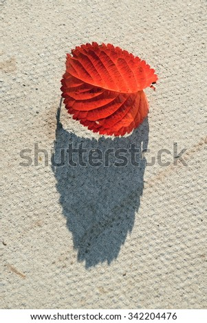 Fallen red leaf with long shadow - stock photo