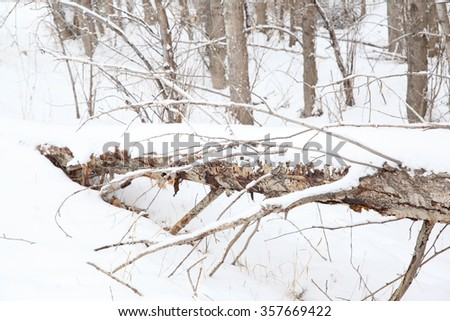 Fallen tree covered in snow mid winter - stock photo