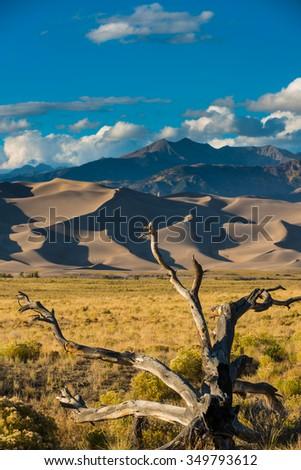 Fallen tree Great Sand Dunes National Park Colorado USA Vertical Composition - stock photo