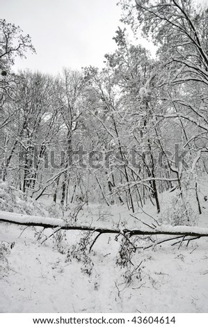 fallen tree in the winter forest - stock photo