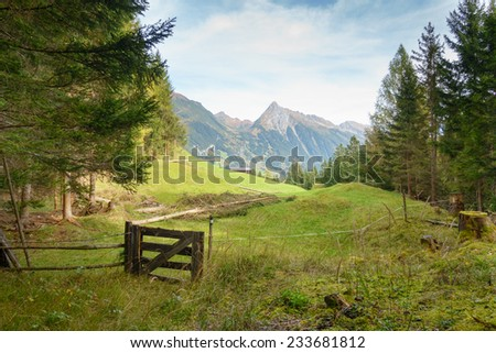 fallen tree on the forest glade - stock photo
