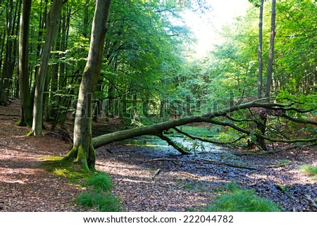Fallen tree over a stream in the forest