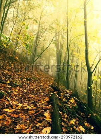 Fallen trunk in golden autumn forest, tourist stony footpath.  Broken tree.  - stock photo