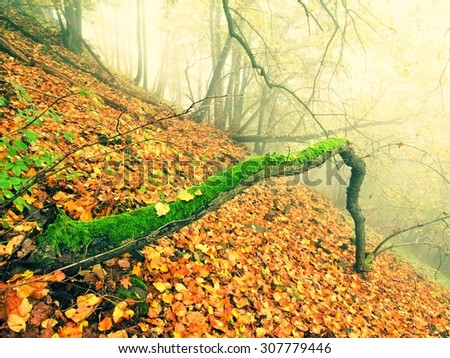 Fallen trunk in golden autumn forest, tourist stony footpath.  Broken tree. Soft effect. - stock photo