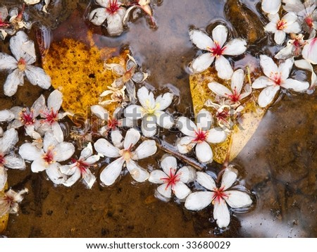 Fallen tung flowers on water - stock photo