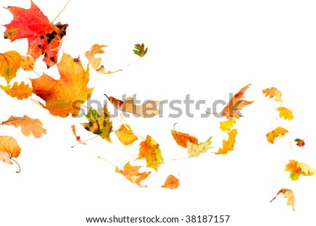 Falling and spinning autumn leaves isolated on white - stock photo