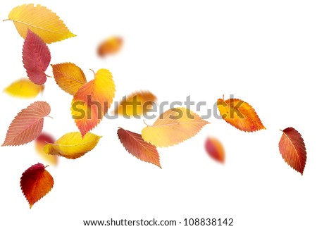 Falling and spinning autumn leaves on white background - stock photo