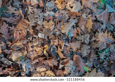 Falling dry brown leaves on dry grass with soil and cement floor in Autumn