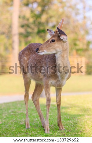 fallow deer - dama dama standing on green grass - stock photo