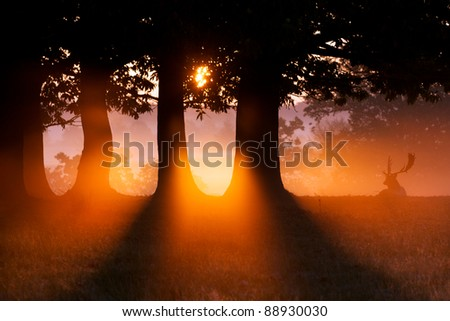 Fallow Deer watching the sun rise in the morning mist - stock photo