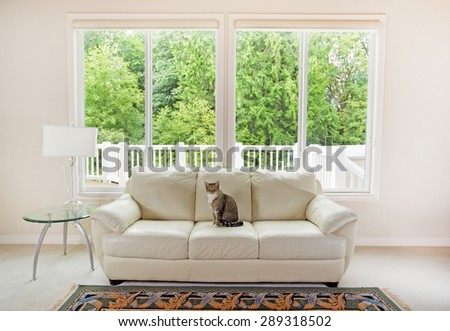 Family cat sitting on white leather couch and large windows showing bright green trees in background. - stock photo