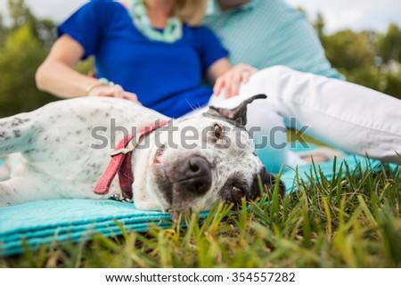 Family dog enjoys a belly rub outside - stock photo