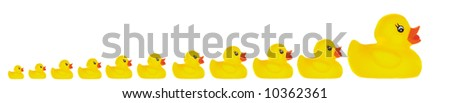 Family duck toy a over white background - stock photo
