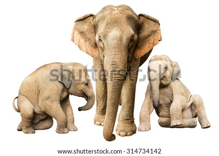 Family elephant on isolated.