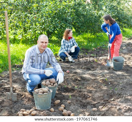family harvesting potatoes in vegetable garden - stock photo