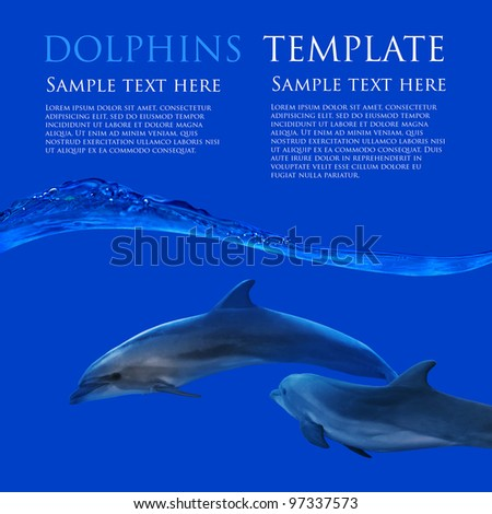family of dolphins underwater on flat blue background with waterline template - stock photo