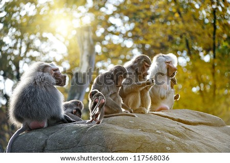 Family of monkeys - stock photo