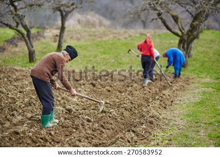 Family of peasants cultivating potatoes on a fresh plowed field - stock photo