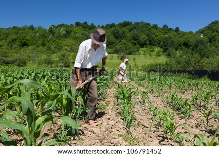 Family of rural workers weeding on the corn field with the forest in the background - stock photo