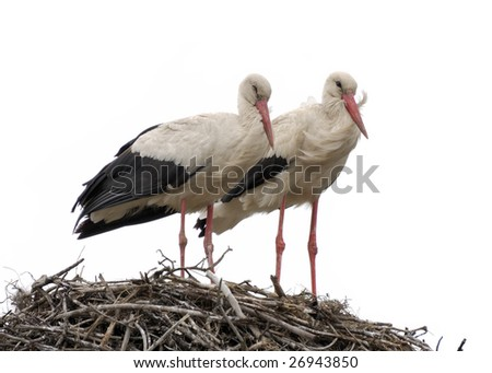 Family of storks in the nest on a white background - stock photo