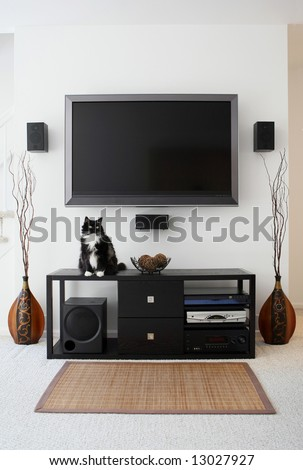 Family pet sitting on home theater - stock photo
