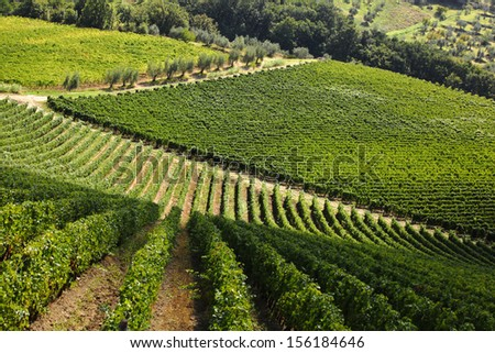 Famous Tuscany vineyards near the Florence in Italy - stock photo
