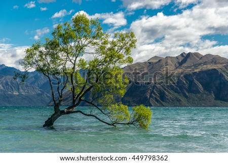 Famous Wanaka lone tree. Wanaka New Zealand - stock photo