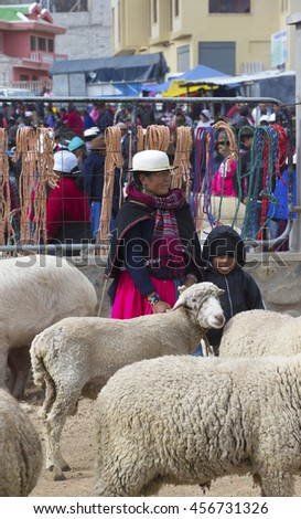 FAMOUS WEEKLY ANIMAL MARKET IN CA�AR, ECUADOR - July 16, 2016:  Local people called Cañari come to this colorful animal market every Sunday to buy, sell or trade their livestock.   - stock photo