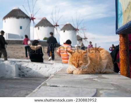 Famous windmills on the island of Mykonos in Greece and red cat. - stock photo