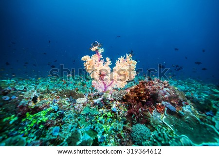 fan coral - stock photo