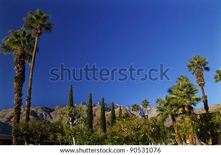 Fan Palms Trees washingtonia filifera Mountains Palm Springs California - stock photo