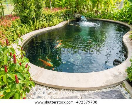 Fancy carp koi fish pond garden stock photo royalty free for Koi pond music