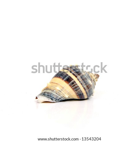 Fancy sea shells against a white background.