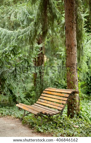Fancy wooden curve shaped bench under old and tall pine trees in beautiful quiet and peaceful green botanic garden park