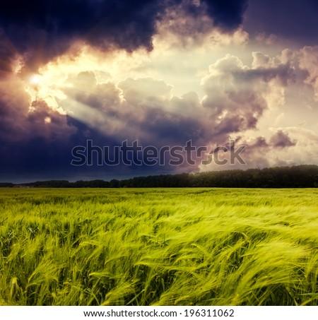 Fantastic field at the dramatic overcast sky. Dark ominous clouds. Ukraine, Europe. Beauty world. - stock photo