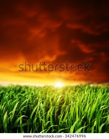 Fantastic field glowing by sunlight. Red overcast sky with sunny beams. Dramatic and picturesque scene. Location Ukraine, Europe. Beauty world. Instagram toning. Warm toning effect. - stock photo