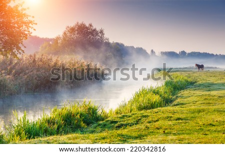Fantastic foggy river with fresh green grass in the sunny beams. Dramatic colorful scenery. Seret river, Ternopil. Ukraine, Europe. Beauty world. - stock photo