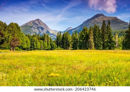 Fantastic mountain meadows in National Park High Tatra. Dramatic scenery. Strbske pleso, Slovakia, Europe. Beauty world. - stock photo
