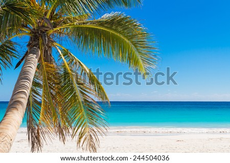 Fantastic palm tree over tropical beach in luxury resort. - stock photo