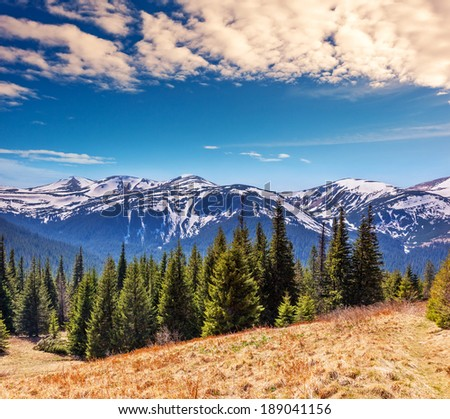 Fantastic sunny day is in mountain landscape. National park Chornogora. Carpathian, Ukraine, Europe. Beauty world - stock photo
