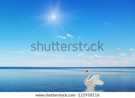 Fantastic swan on the water surface. - stock photo