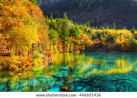 Fantastic view of the Five Flower Lake (Multicolored Lake) among colorful fall woods in Jiuzhaigou nature reserve, China. Autumn forest reflected in azure water. Submerged tree trunks at the bottom.