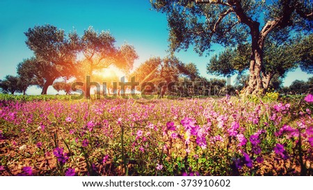 Fantastic views of the garden with blue sky. Mediterranean climate. Gorgeous and picturesque scene. Location Sicily island, Italy, Europe. - stock photo