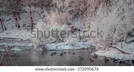fantastic winter landscape. Frost on branches in winter in a forest near the frozen rivers, snowy morning in the forest. frosty fairy-tale forest. wild ducks winter  - stock photo